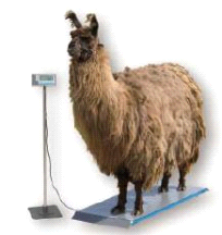 Salter Brecknell PS1000 Veterinary 1000lb Scale